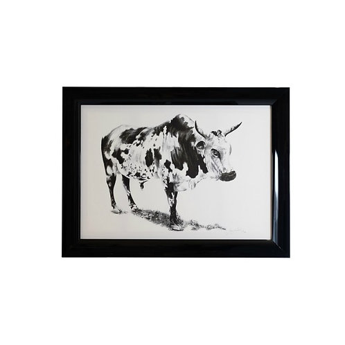 Black and White Signed Limited Edition Nguni Framed Print