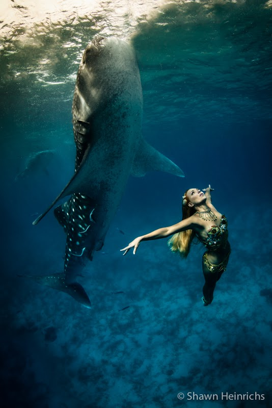 Photo by Shawn Heinrichs