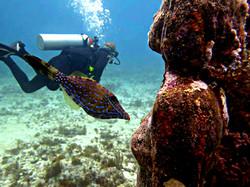 Dr. Pierce Diving