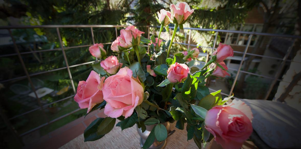 Rosas en balcón.jpg