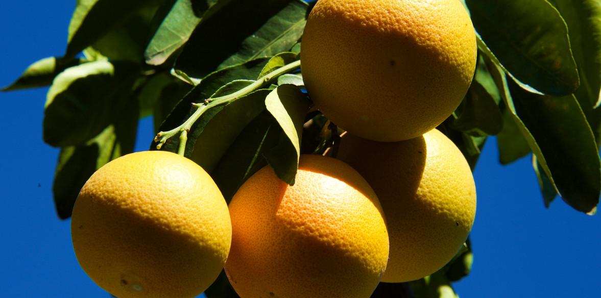 Limones.jpg