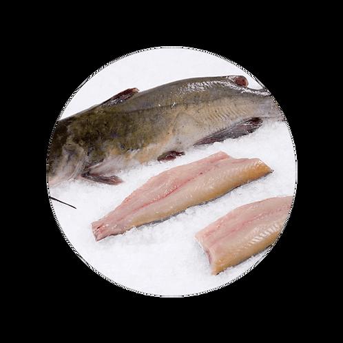 Fresh Catfish