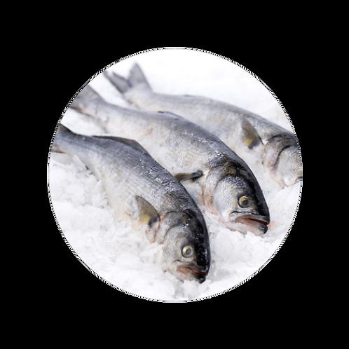 Fresh Bluefish