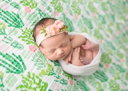 Newborn Succulent Photography Cactus