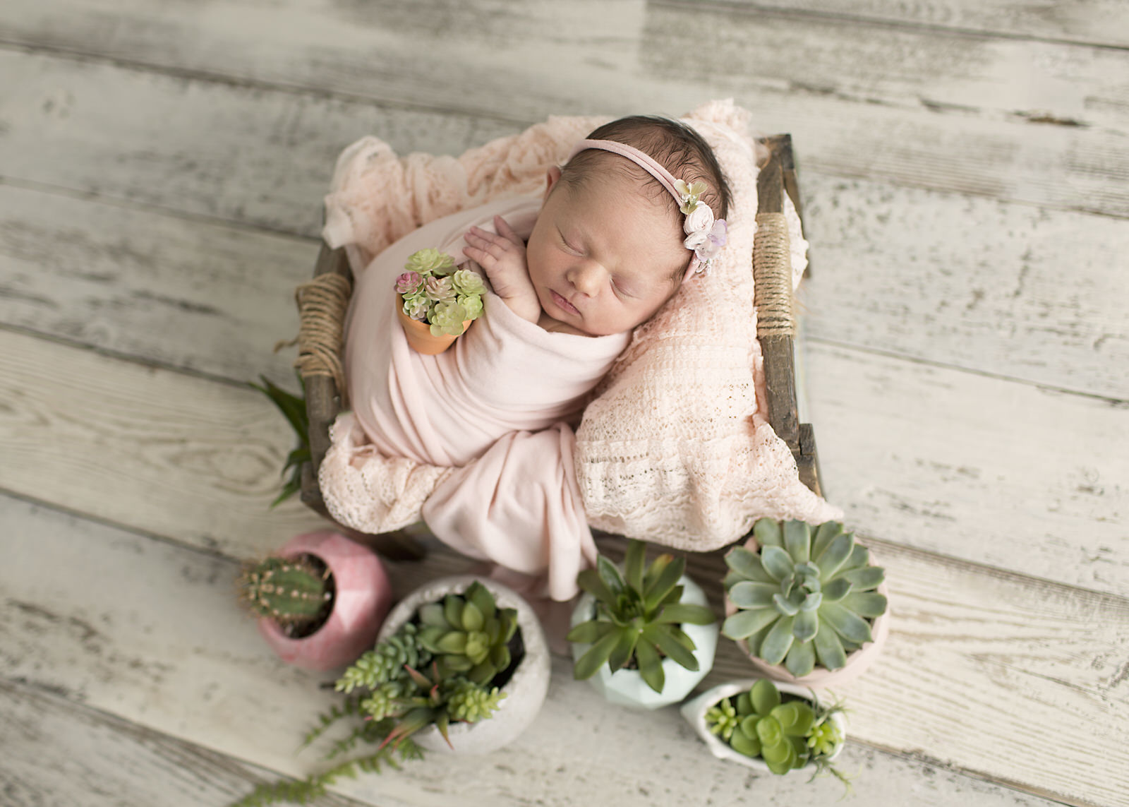 Newborn Succulent Photography