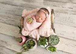 Newborn Succulent Photography
