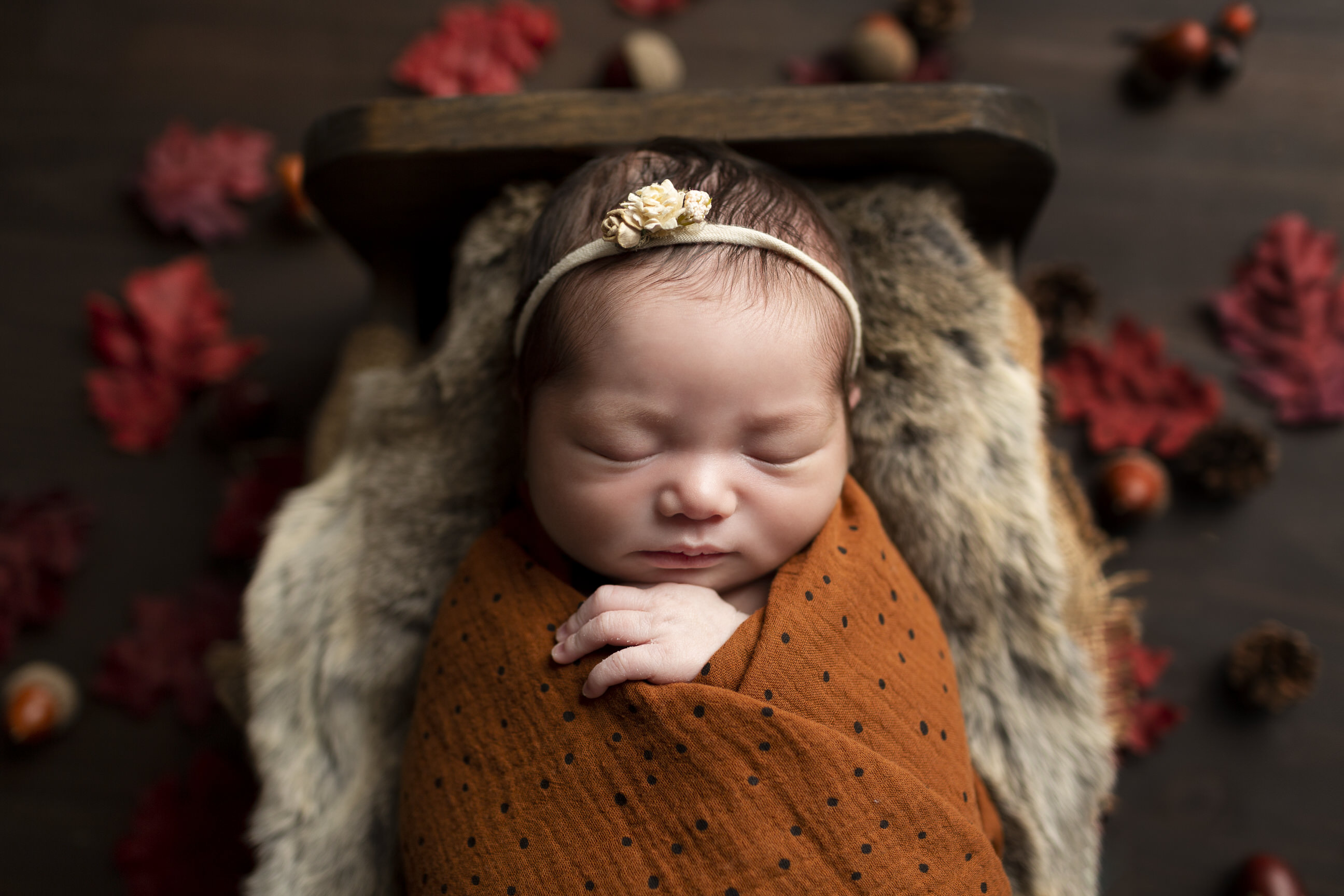 fall newborn photos regina