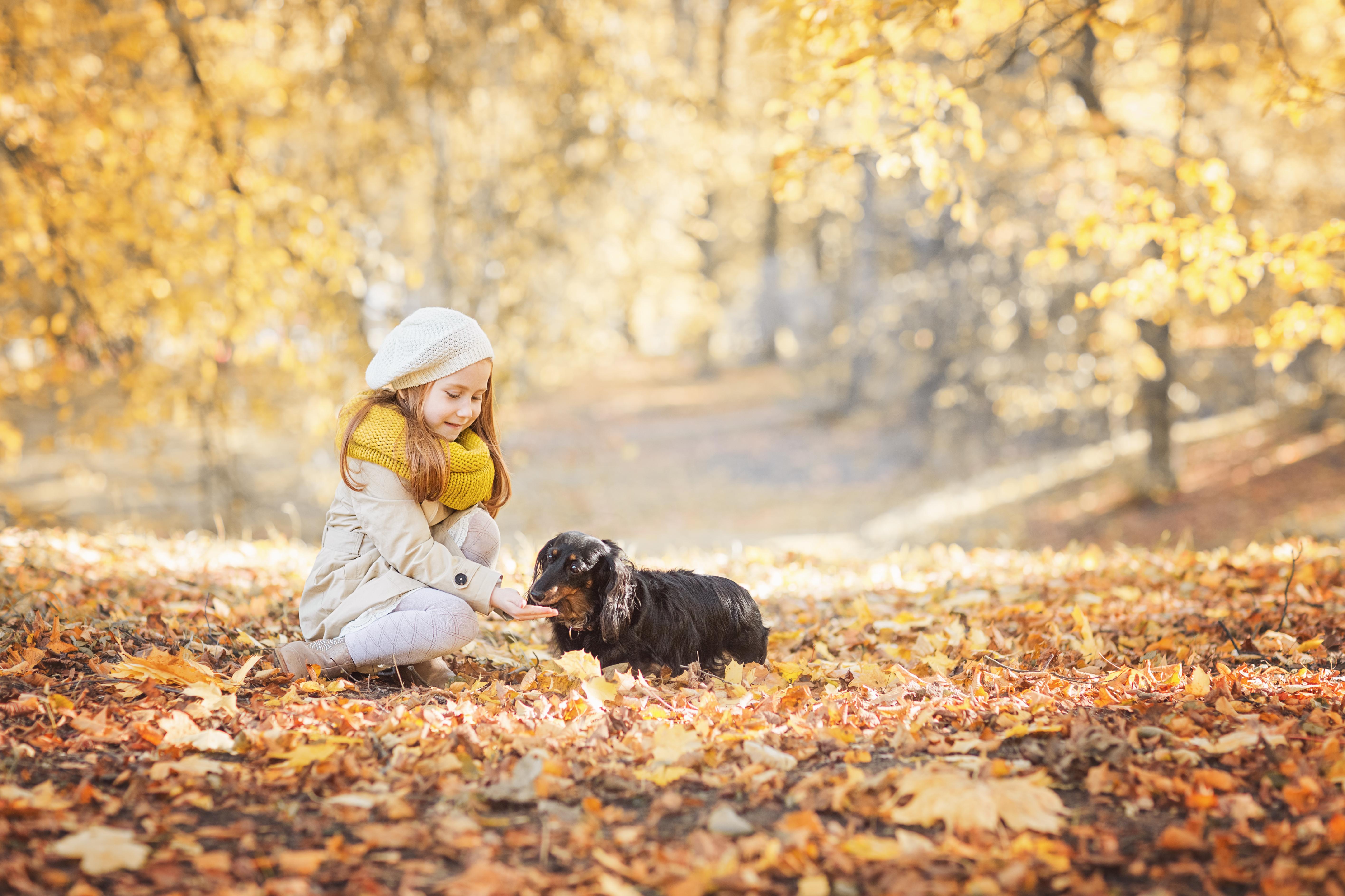Про осень и про дружбу