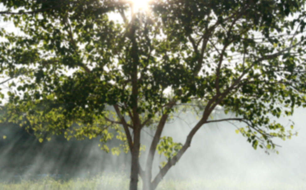 Misty Sunbeams
