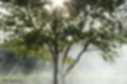 arbre lien entre la terre et le ciel