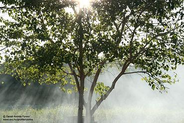 Misty Sunbeams