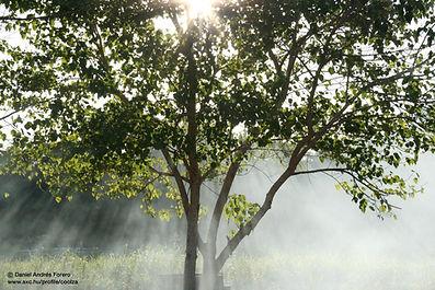 Sun shining through branches