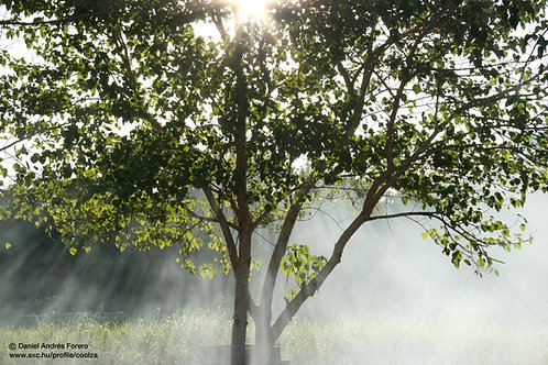 2019 Nov 18 Spiritual Law: Tree of Life