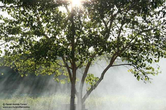 ミスティ太陽光線