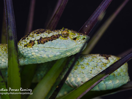 A checklist of the Amphibians and Reptiles of Costa Rica: Additions and nomenclatural revisions