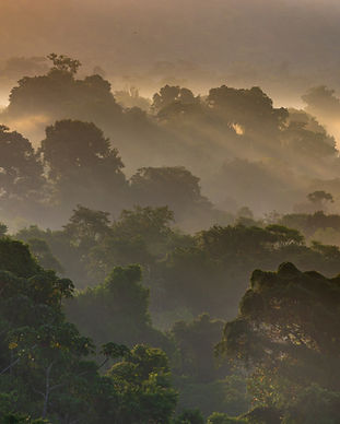 Herping Osa Costa Rica.jpeg