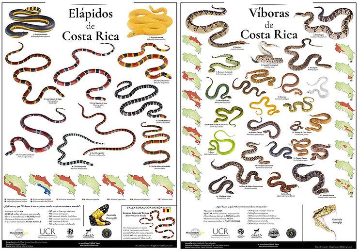Posters Viperidos y Elapidos de Costa Ri