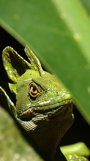 COSTA RICA CARIBBEAN HERPING EXPEDITION
