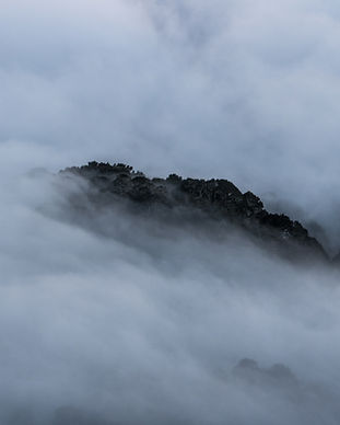 San José Herping Cloudforest Costa Rica .jpeg