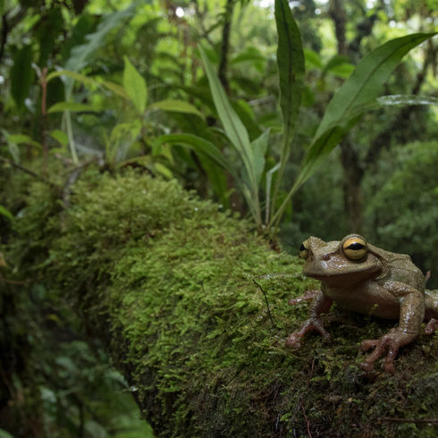 Guatemala Herping Expedition