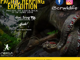 Herping Expedition to Costa Rica's Pacific.