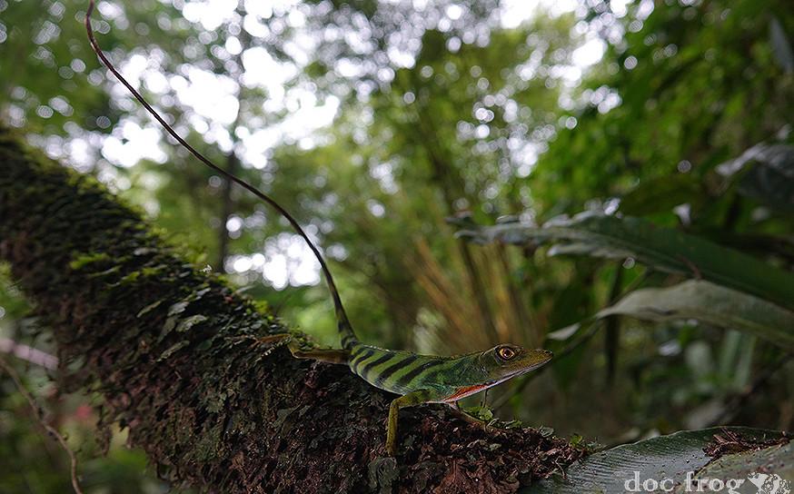 PANAMA HERPING EXPEDITION