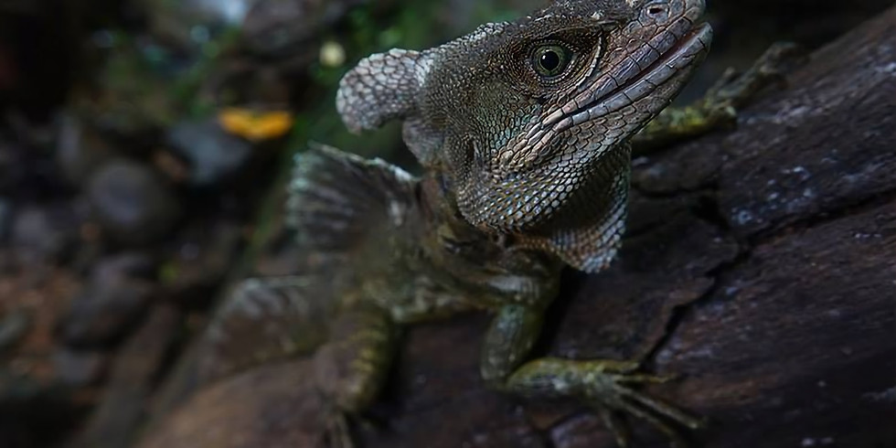 COSTA RICA PACIFIC HERPING EXPEDITION 17 - 26 JUNE  2018