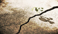 Growing through difficult times, the power of resiliency, hope, and transformative loss.