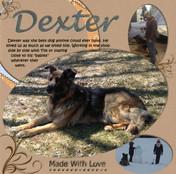 Pet Photo Displays.jpg