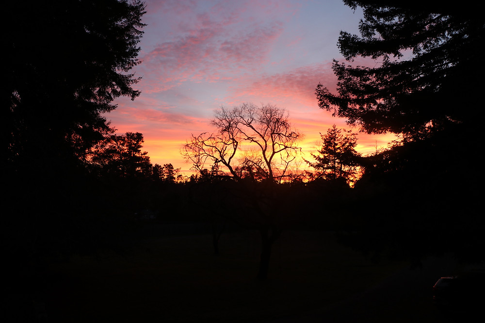 Silhouette of trees against a brilliant sunset of reds, oranges and purples