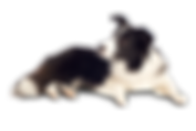 Dog-PNG-12.png