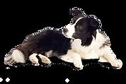 Dog-PNG-12.png