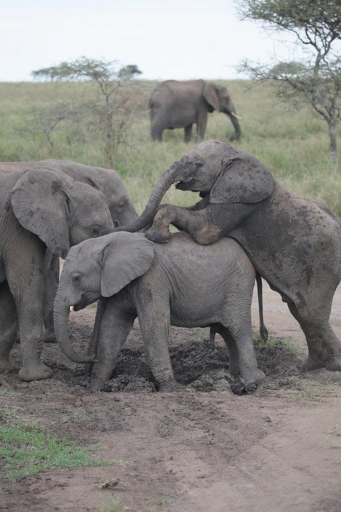 Elephants Mud Playing