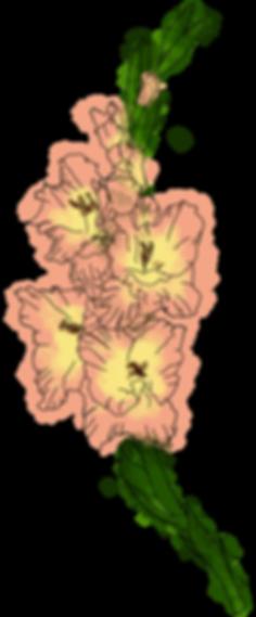 gladiola_leftcurve.png