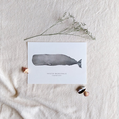 Baleia Cachalote