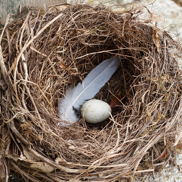Sage Feather Nest.png