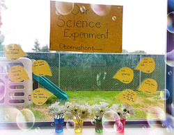 our scientist observation experience