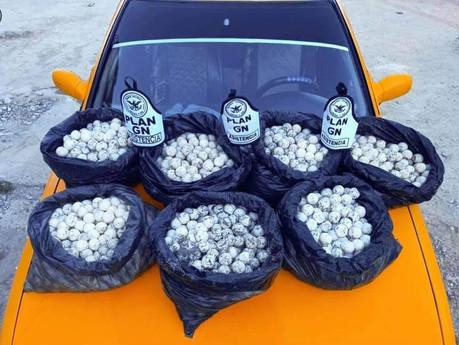 Llevaba en su automóvil 3 mil 500 huevos de tortuga, la Guardia Nacional se los decomisa