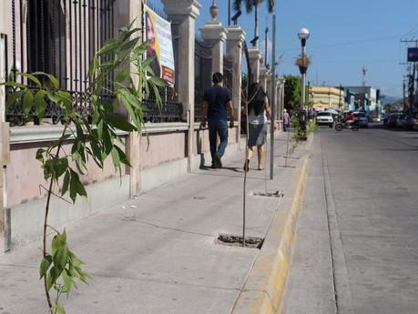 """Le dan """"vida"""" a la Avenida Miguel Hidalgo en Escuinapa, Ecología sembrará 400 plantas"""