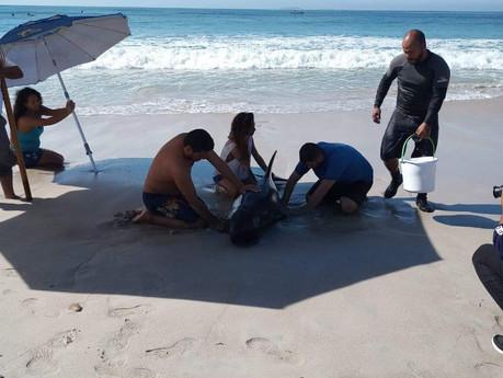 Rescatan a tres delfines que se encontraban varados a la orilla de la playa