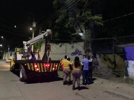 Derriban viejo árbol de Huanacaxtle ubicado en la Colonia Paredones tras ataque de abejas