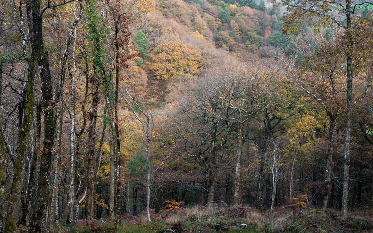 Fingle Woods (Ref: 3660)