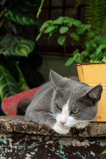 Chilling Out Cat