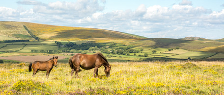 Corndown Down Mother and Foal