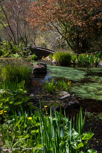 The Pond - Portrait (Ref_ 6421)