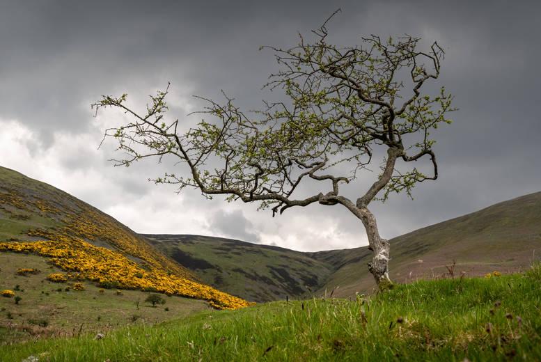Windswept Tree (Ref: 1061)