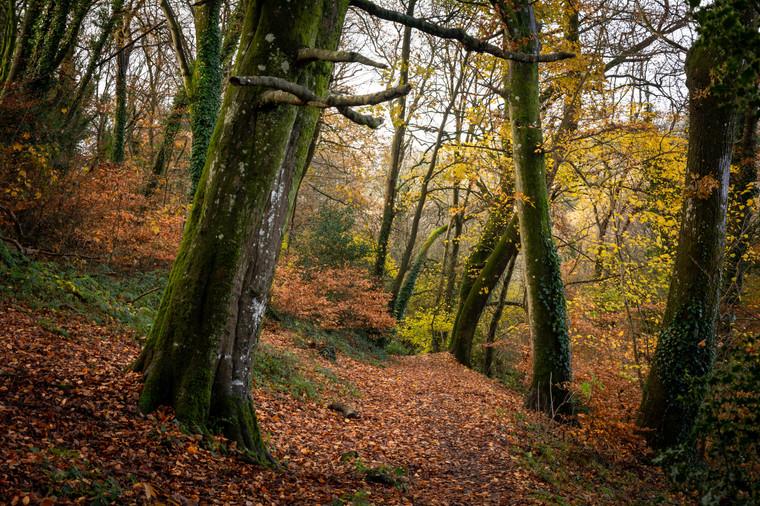 Woods nr Staddon (Ref_ 2273)