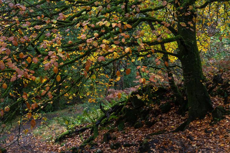 Skaigh Woods (Ref_ 3094)