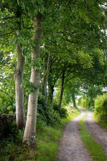 Green Lane in the Lyth Valley (Ref:  403