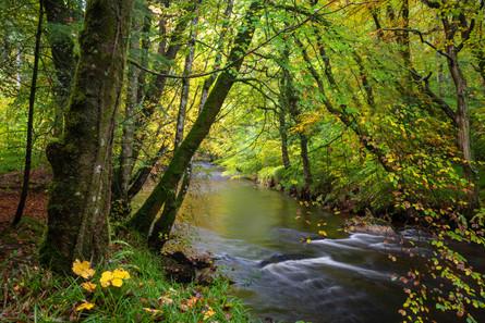 River Teign Flow (Ref_ 2504)